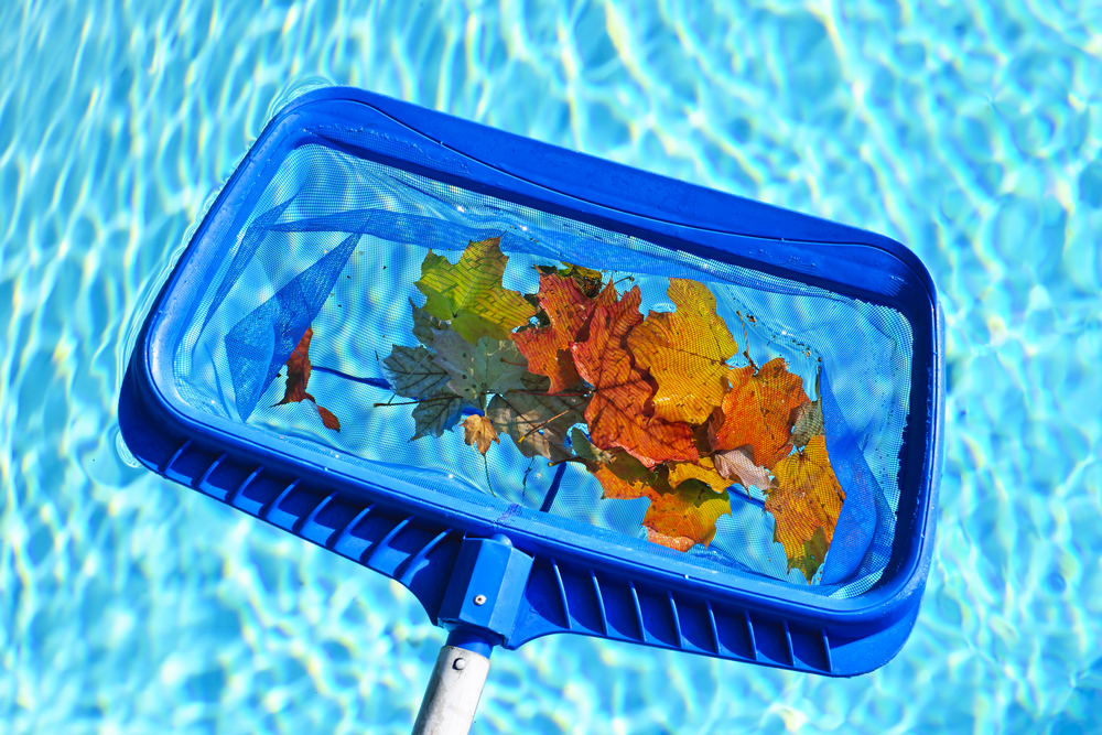leaves-in-pool